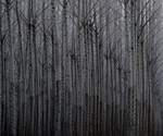 Forest Illusions-Poplar