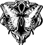 Vintage Butterfly Emblem