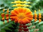 Flowers-Effects