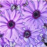 full frame blossoms