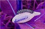 Crazy Caterpillar