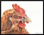 Goldie the Chicken