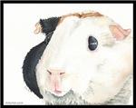Izzy the Guinea Pig