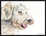 Spencer the Yodeling Yardbird Schnoodle