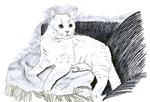 White Cat Clothing