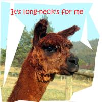 It's long-necks for me