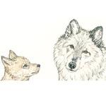 Respect Wolf