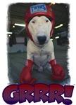 Grrr! Boxer