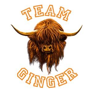 Team Ginger Scottish Highland Cow