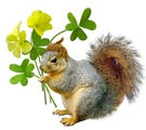 Squirrel with Sourgrass