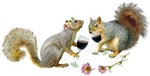 Squirrels Wedding Wine