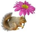 Squirrel Pink Flower
