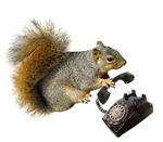 Squirrel on Rotary Phone