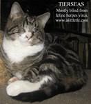 Tierseas the blind kitten