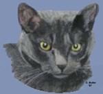 American Shorthair Gray Cat
