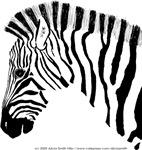 Grant's Zebra Portrait Looking That Way