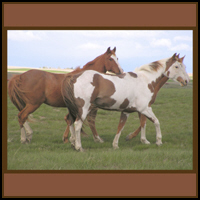 HORSE T-SHIRTS & GIFTS