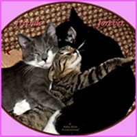 KITTEN FRIENDS FOREVER T-SHIRTS AND GIFTS