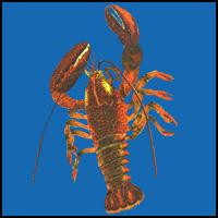 LOBSTERS ON T-SHIRTS & GIFTS