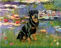 LILIES (#2)<br>& Rottweiler