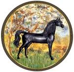 Black Arabian Horse<br>In Spring