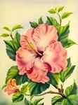 Pink Hibiscus Vintage Painting Print