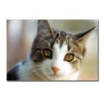 Cat and the Fiddle! Gifts for pet lovers!