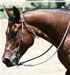 Horse Photo Mugs