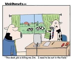 This Desk Job is Killing me!