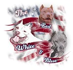 Red, White & Blue Pit Bull Dogs