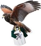 Falconry & Hawks