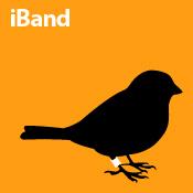iBand (orange)