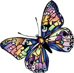 Butterfly of Many Colors