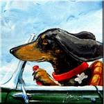 Dachshund Takes the Wheel