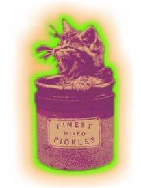 Cat Pickle