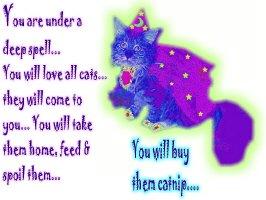 Spell of the Cat Sorcerer