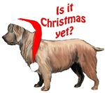 Glen of Imaal terrier Christmas