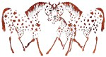 Appaloosa Horse Lover Gifts and Apparel