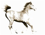 The Young Arabian Horse