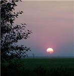Prairie Sunset With Tree