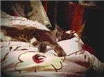 Lazing