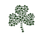 Irish & Lucky Shamrocks