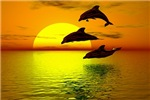 Dolphins-sunset