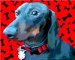 Dachshund, Weiner Dog, Dachie