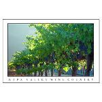 Large Napa Valley Wine Country Posters