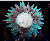 Turquoise Sunflower