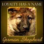 Loyalty- German Shepherd