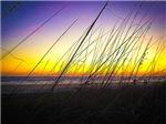 Sea Oats at Sunrise on Daytona Beach IV