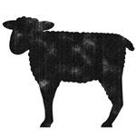 Cute Sheep/ Black Sheep