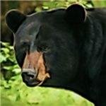 Brown Nose Black Bear